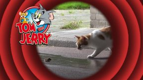 Tom-en-Jerry-2-288x162.jpg