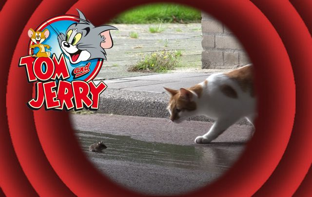 Tom-en-Jerry-2-640x404.jpg