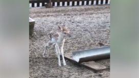 bambi-272x153.jpg