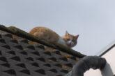 Kat op dak
